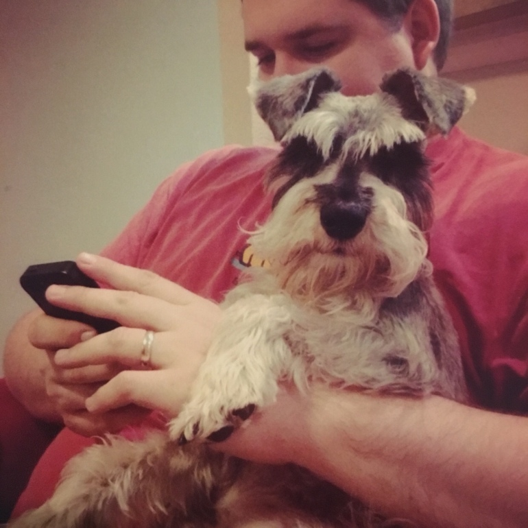 Zeus Schnauzer Foster Care Journey Maegan Johnson 1